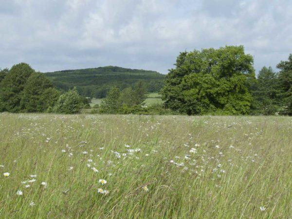 Erhalt von Grünland ist eine Greening-Maßnahme