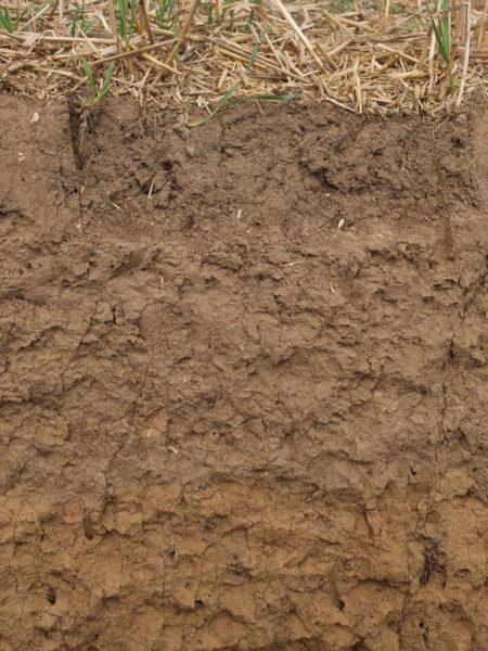 Anzustrebendes Bodenprofil