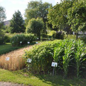 Energiepflanzen-Schaugarten auf dem Eichhof