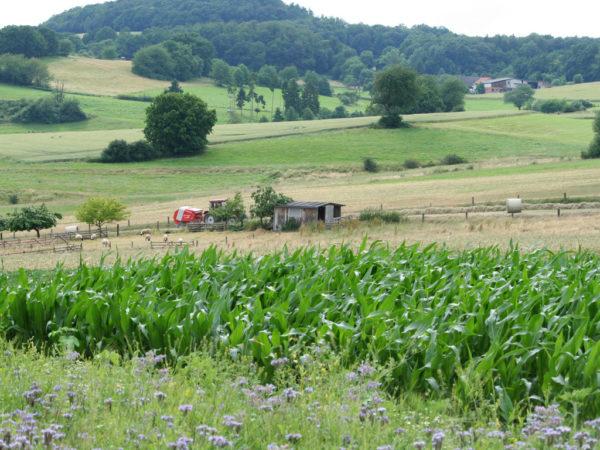 Vielgestaltige Nutzung und Landschaftsstrukturen - eine gute Basis für die biologische Vielfalt