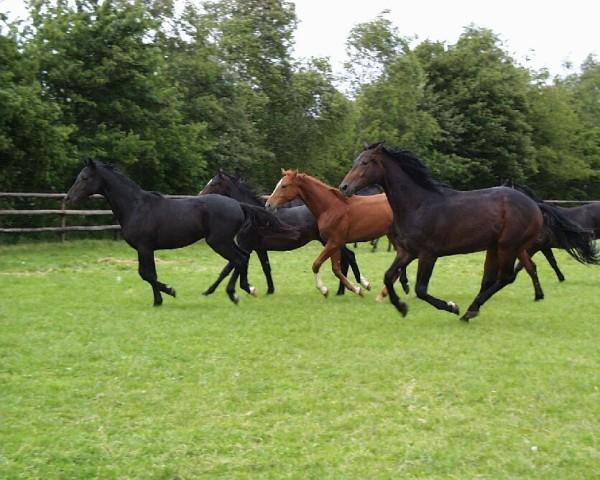 Pferdegruppe auf einer Weide