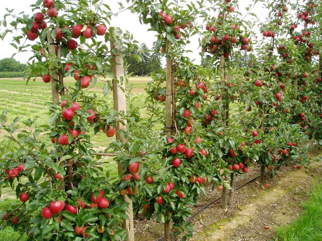 Obstbau » Landesbetrieb Landwirtschaft Hessen