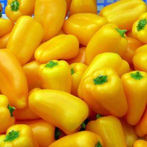 Gelbe Snackpaprika