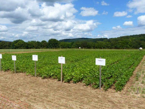 Der Landessortenversuch zu Futter- und Speisesojasorten auf dem Gladbacherhof 2016