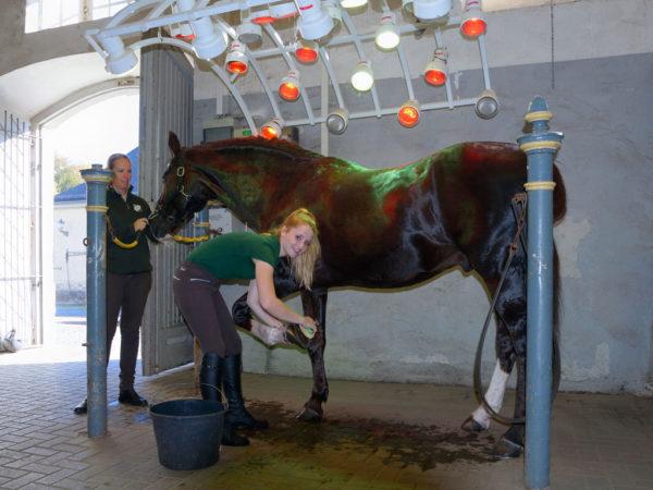 Pferdepflege gehört zu den täglichen Arbeiten eines Pferdewirts