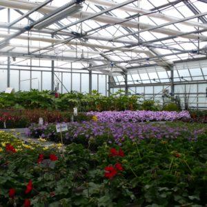 Geisenheim GWH Zierpflanzenbau