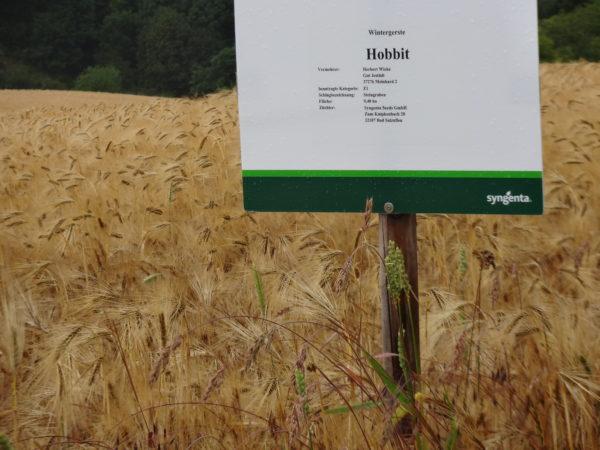Saatgutvermehrung Weizen