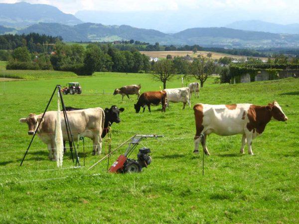 Die Kontrolle des Weideaufwuchses ist auf Vollweidebetrieben unerlässlich.
