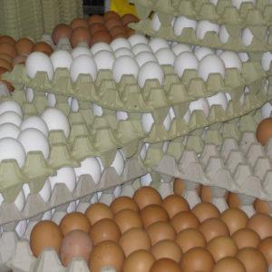 Frische Eier direkt vom Erzeuger – das Sonntagsfrühstück ist gerettet.
