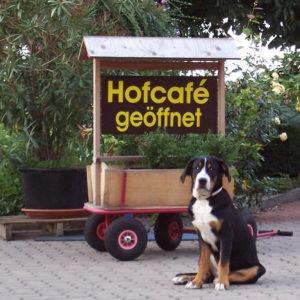 Hereinspaziert: Das Hofcafe hat geöffnet! Regionale Spezialitäten warten auf Kundschaft.