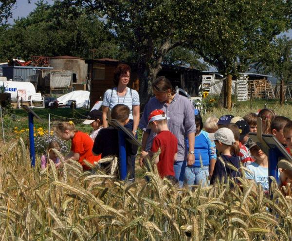Bauernhofpädagogik: Kinder im Getreide auf einem Lernbauernhof