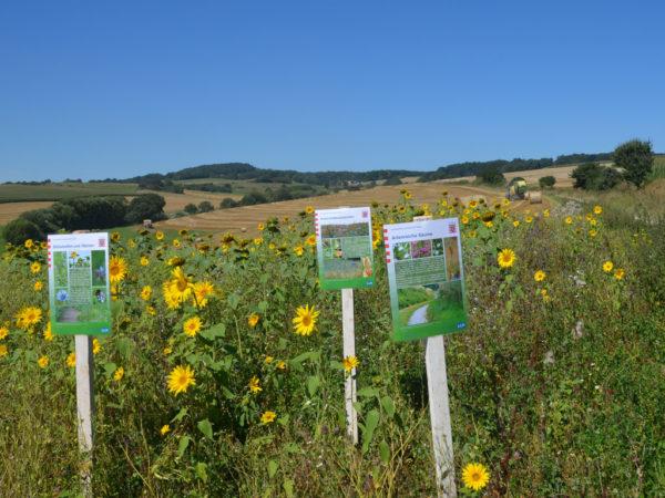 Infotafeln im Pilotbetrieb im Landkreis Fulda - Spezielle Blühmischung zur Förderung von Feldvögeln auf einer Teilfläche mit geringer Produktionseignung