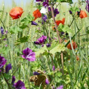 Biodiversität – ein wichtiges Thema beim Einklang mit der Natur