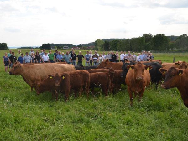 Die Angus-Züchter aus allen Teilen Hessens bekamen bei Klaus Heiderich in Christerode eine hervorragend selektierte Herde zu sehen.