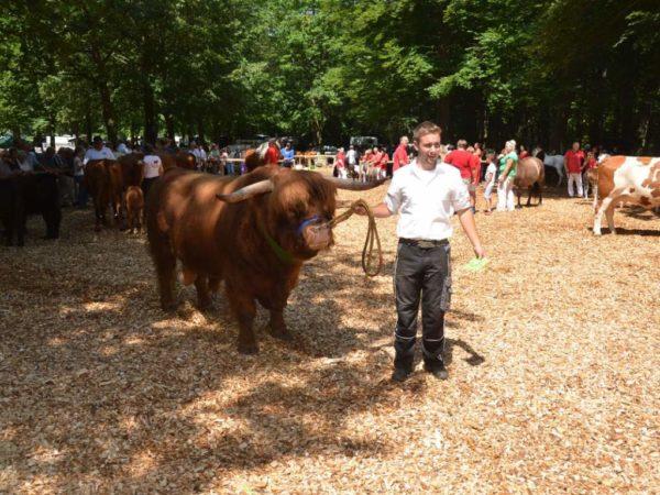 Der Publikumsliebling beim Ochsenfest in Wetzlar war der Highland-Bulle Oswin vom Eiserbachtal, der von der Familie Specht, Wetter, präsentiert wurde.