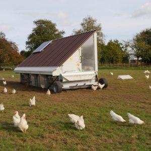 Ökologische Hühnerhaltung mit Hilfe eines Hühnermobils