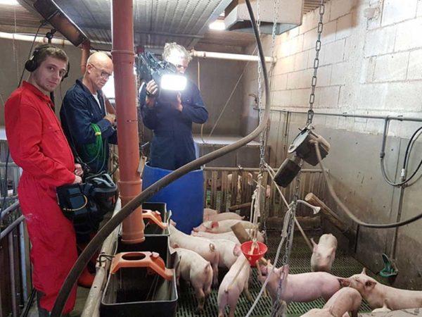 Filmaufnahmen im Schweinestall; Foto: BLE (Bundesministerium für Ernährung und Landwirtschaft)