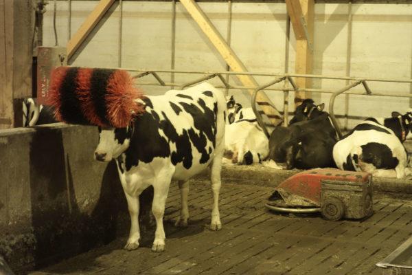 Die Ebeling Engelhardt GbR ist ein Beispiel für Betriebskooperationen in der Milchviehhaltung