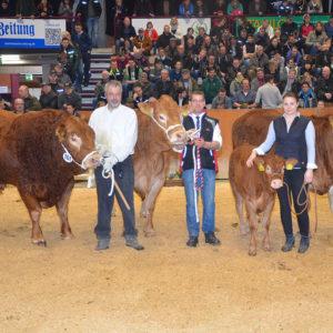 Die Siegertiere der Rasse Limousin im Schlussbild aus den Betrieben Hildenbrand/Jobst, Kohlmann und Brandt.