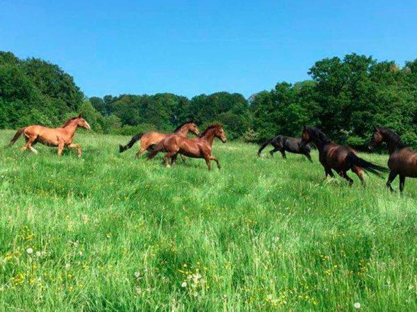 Pferde auf Weide im Sommer