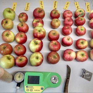 Messinstrumente und Probenäpfel