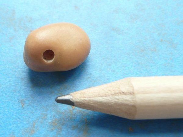 Ackerbohne mit Schlupfloch des Ackerbohnenkäfers