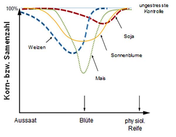 Abbildung 2. Einfluss von Stresseinwirkung zu unterschiedlichen Entwicklungsphasen verschiedener Kulturen auf die Korn- bzw. Samenzahl (nach Calvino und Monzon, 2009).
